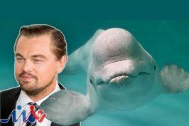 تلاش لئوناردو دی کاپریو برای نجات ۱۰۰ نهنگ